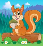 Image with squirrel theme 3 Royalty Free Stock Images