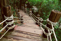 Image of stairway in jungle Royalty Free Stock Image