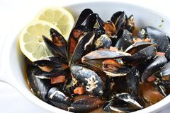 Steamed Mussels with white wine garlic sauce. royalty free stock photos