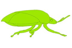 Image of stink bug Royalty Free Stock Photo