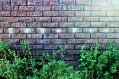 An image of a stone wall in the garden Stock Image