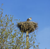 Image of a stork in its nest with blue sky Royalty Free Stock Photo