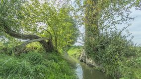Image of a stream between two trees, one straight and the other crooked with abundant green vegetation. On a wonderful sunny day in of the Itteren recreational stock photography