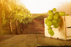 Image of summer grapes on wooden table Royalty Free Stock Photos