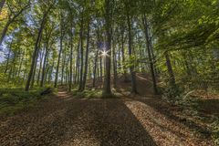 Image of sunbeams shining through forest trees with many leaves on the ground. A amazing sunny day in Spaubeek in South Limburg in the Netherlands Holland royalty free stock photography