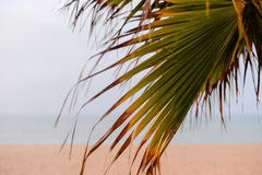 Image of sunset on the beach through palm tree Royalty Free Stock Photo