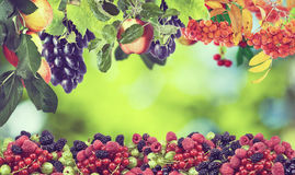 Image of sweet apples, grapes,raspberries and cherries Royalty Free Stock Photos