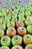 Jonathan green apples. Image of a table full of tasty Jonathan green apples stock photography