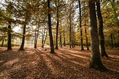Beautiful forest on a sunny autumn afternoon, royalty free stock image