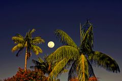 Coconut trees framed by the full moon royalty free stock images