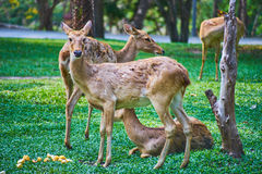 This image is about thai antelope, bangkok thailand Royalty Free Stock Photography