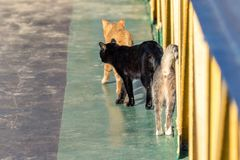 three street cats go wagging their tails stock photo