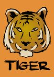 Tiger head. Image of a tiger head Stock Images