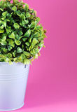 Image of tinny planter with flower Royalty Free Stock Photography