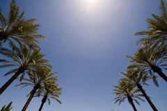 An image of the tops of palm trees Stock Images