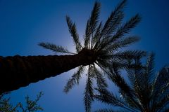 An image of the tops of palm trees Stock Image