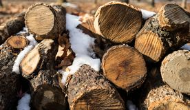 Tree logs in snow royalty free stock photo
