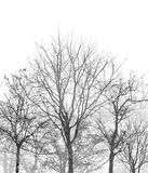 Tree silhouette forest on white background royalty free stock photography