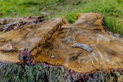 Image of a tree stump from a top view. Stunning image of a tree stump from a top view on a wonderful and cold winter day in the forest of the Belgian Ardennes royalty free stock images