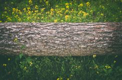 Image of tree trunk in the forest. freedom and renewal concept. Image of tree trunk in the forest. freedom and renewal concept Royalty Free Stock Images