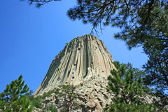 Devil's Tower and trees Royalty Free Stock Photos