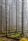 Image of trees in the forest after a storm. With trunks and branches on the ground with haze and light sunlight on a winter day in the Belgian Ardennes royalty free stock photography