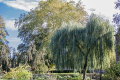 Image of trees and a Weeping Willow on a wonderful day. Image of trees and a Weeping Willow tree on a sunny autumn day in Voerendaal South Limburg in the royalty free stock photo