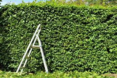 An Image of trimming a hedge, gardening stock photo