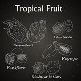 image of tropical fruits drawn on the chalkboard royalty free illustration