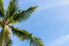 An image of tropical palm tree in the blue sunny sky on paradise island Bali, Indonesia. Stock Images