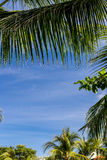 An image of tropical palm tree in the blue sunny sky on paradise island Bali, Indonesia. Royalty Free Stock Images