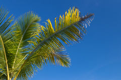 An image of tropical palm tree in the blue sunny sky on paradise island Bali, Indonesia. Royalty Free Stock Photography