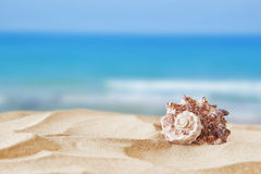 Image of tropical sandy beach and seashell Royalty Free Stock Photography