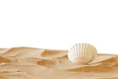 Image of tropical sandy beach and seashell Stock Photography