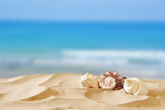 Image of tropical sandy beach and seashells. Summer concept stock photo