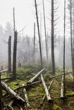 Image of trunks of fallen trees after a big storm with haze in the forest. Image of trunks of fallen trees after a big storm with haze in the middle of the royalty free stock photos