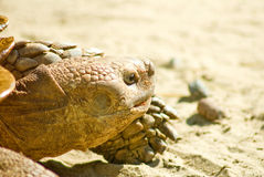 Image of turtle closeup Royalty Free Stock Images