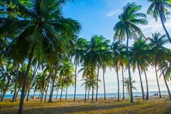 An image of two nice palm trees in the blue sunny sky Royalty Free Stock Image
