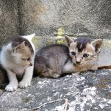 Image of two sitting kittens. stock images