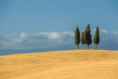 Typical tuscan landscape Royalty Free Stock Image