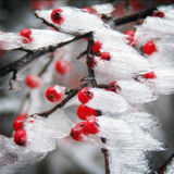 Image of a typical winter frost. (tree with snow and ice Royalty Free Stock Image
