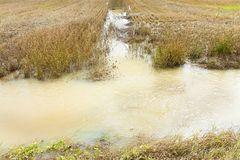 Flooded fields - Fields flooded after several days of rain. Image useful for the following topics: land conservation; climate changes; agriculture; environmental stock images