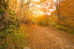 Autumn path in the forest. An image of utumn path in the forest Royalty Free Stock Photos