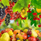 Image of  various ripe fruits closeup Stock Photo