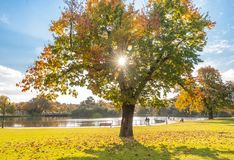 Autumn Ambience. This image was snapped at the local lake on a lovely sunny day in the early stage of autumn Stock Images