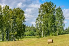 Countryside field with a lonely haystack among trees of birch Stock Photo