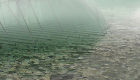 Foggy water background Stock Images