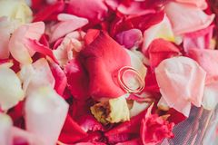 Image of wedding rings in a gift box Royalty Free Stock Photo
