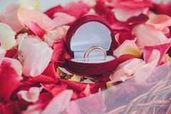 Image of wedding rings in a gift box Stock Photos