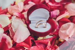 Image of wedding rings in a gift box Stock Photography